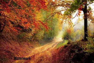 add watermark to photo image